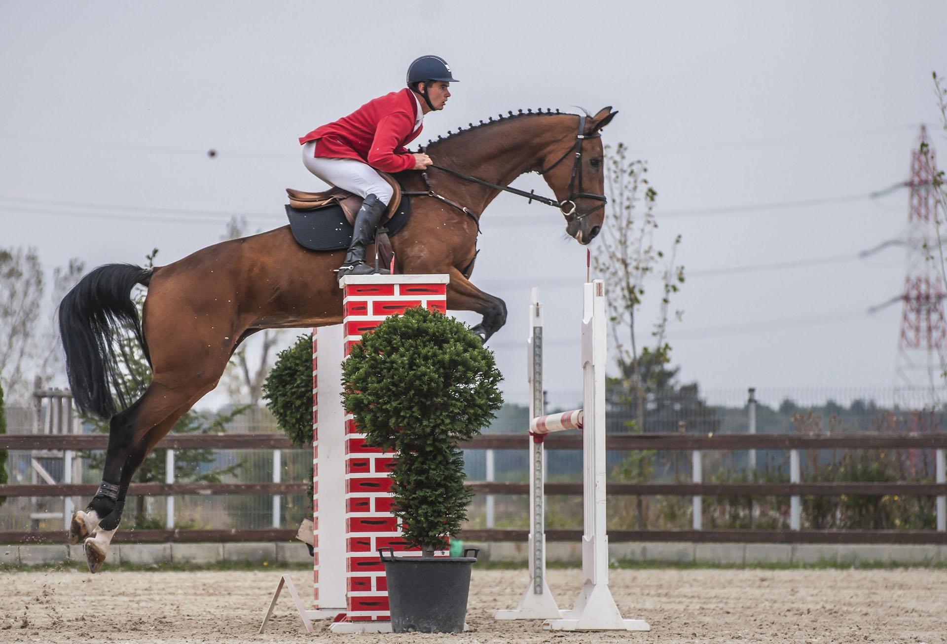 salonul-calul-08