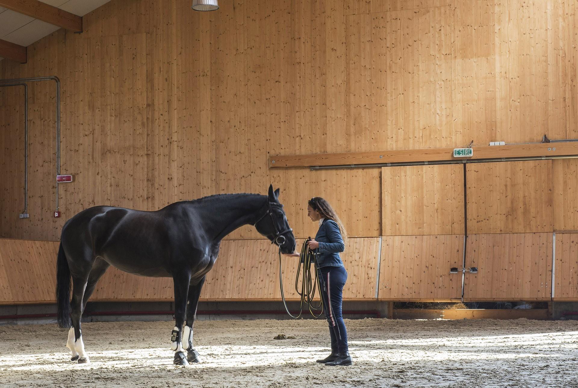 salonul-calul-17