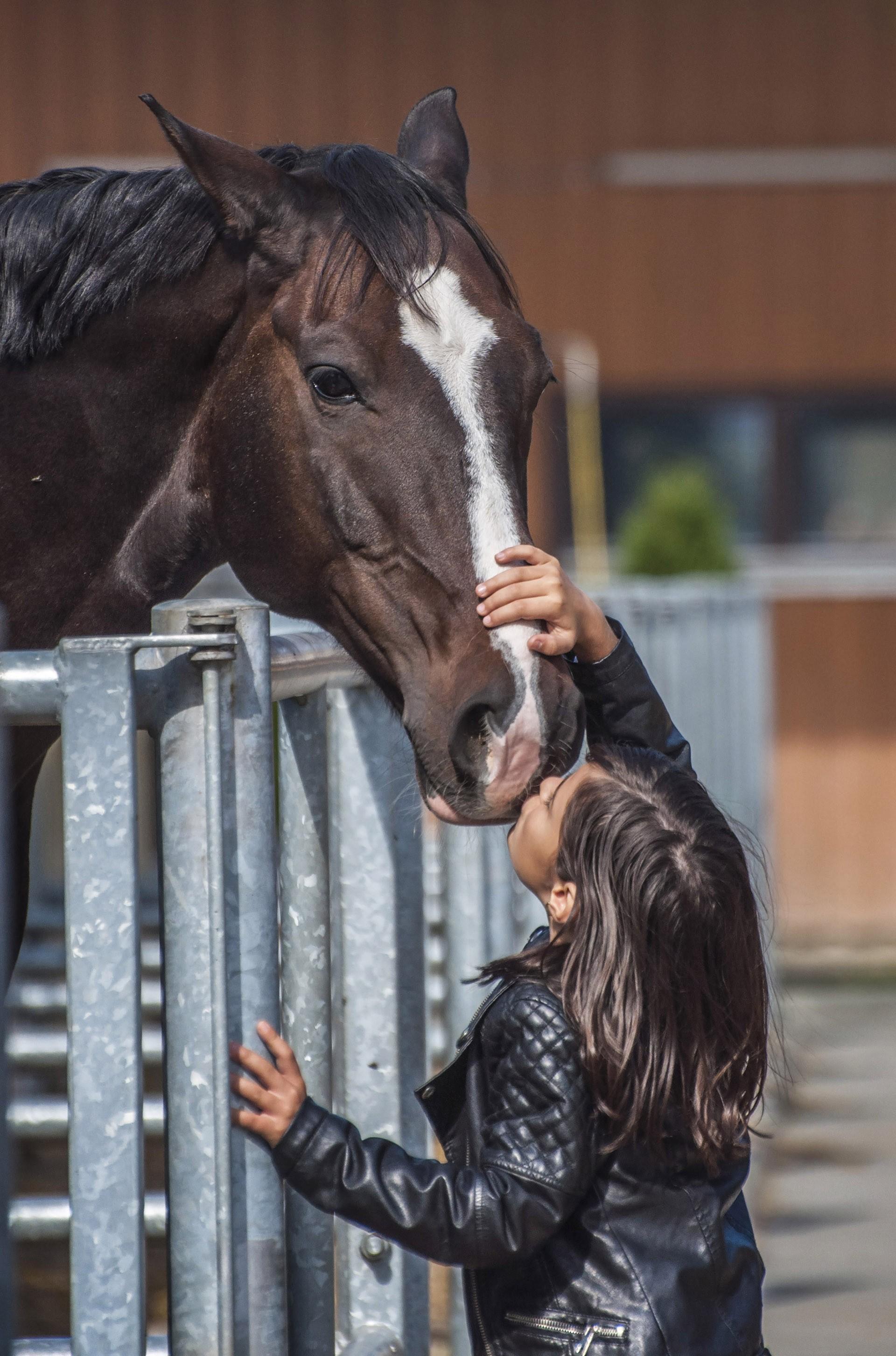 salonul-calul-11