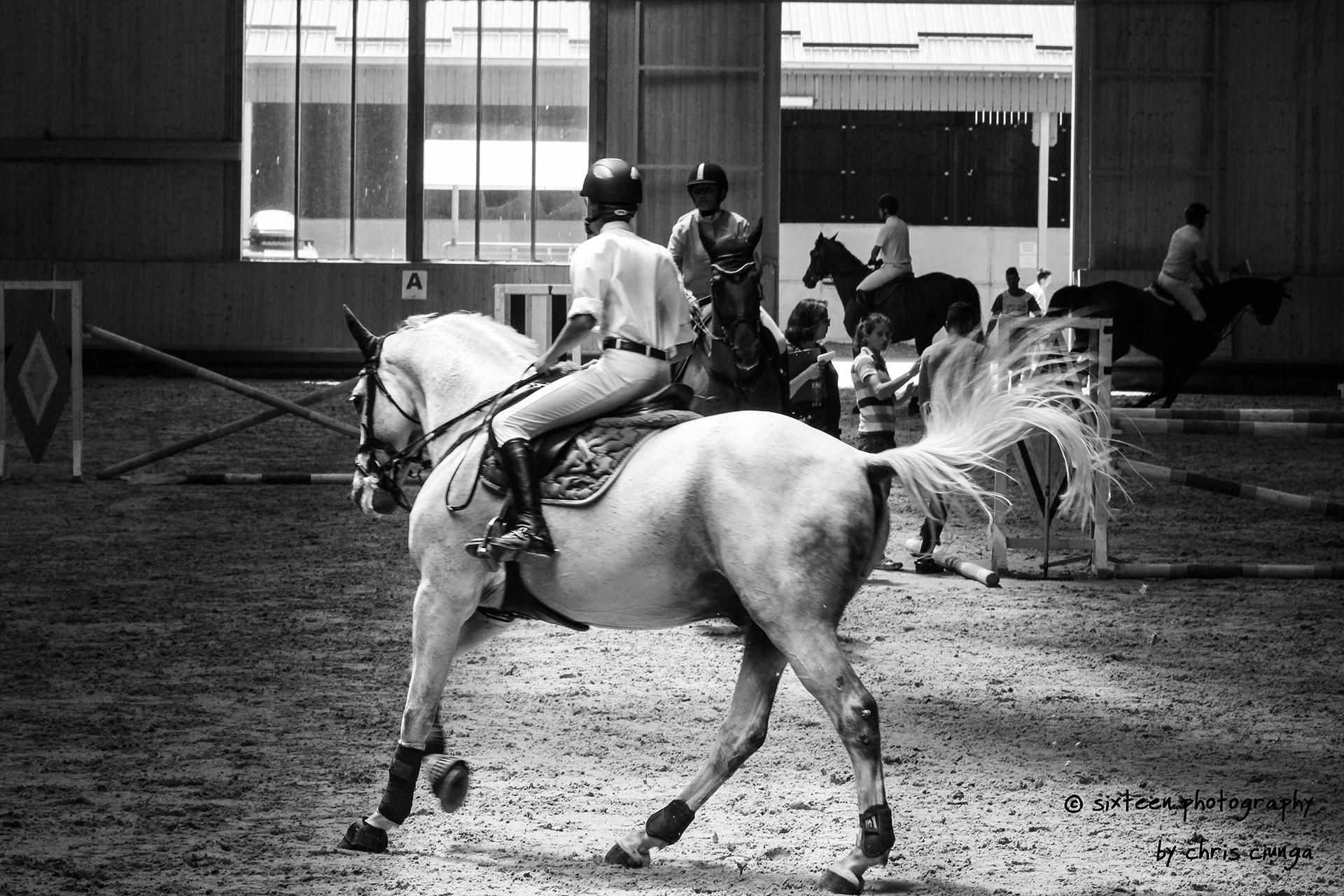 salonul-calul-30